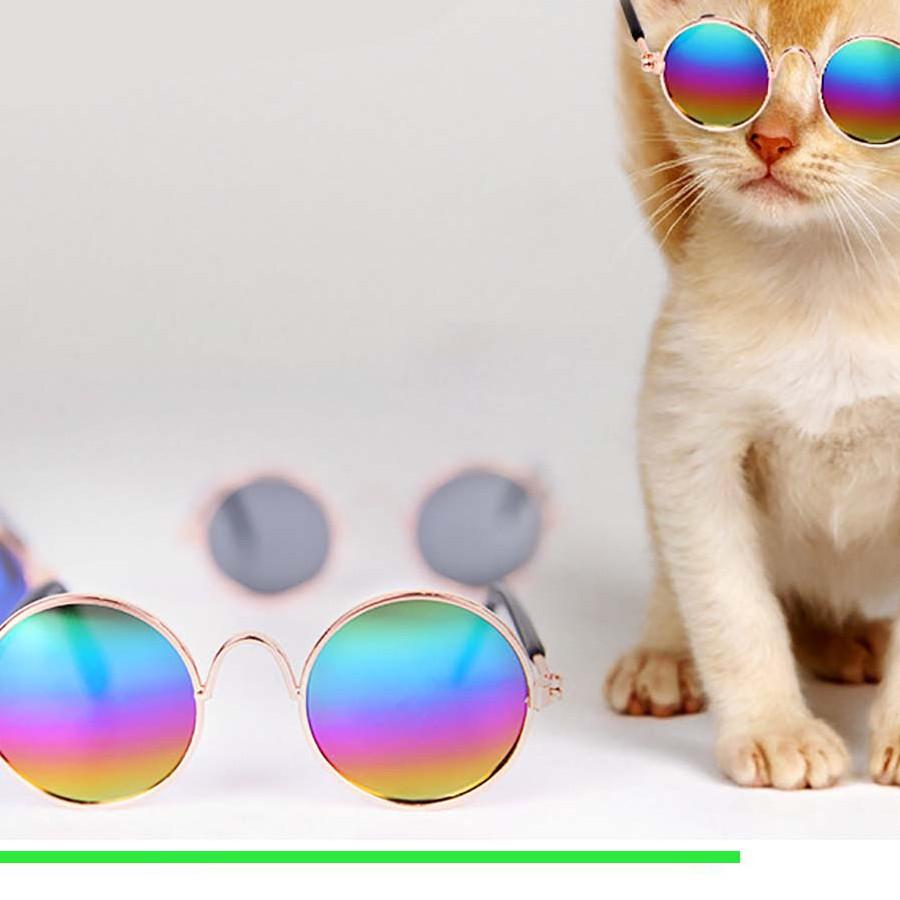 Mắt kính tròn cho mèo (màu ngẫu nhiên)