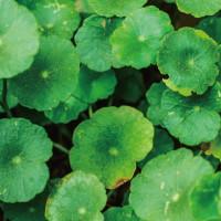 Kem nền dưỡng ẩm chống nắng - naturaglacé EMOLLIENT CREAM FOUNDATION 4