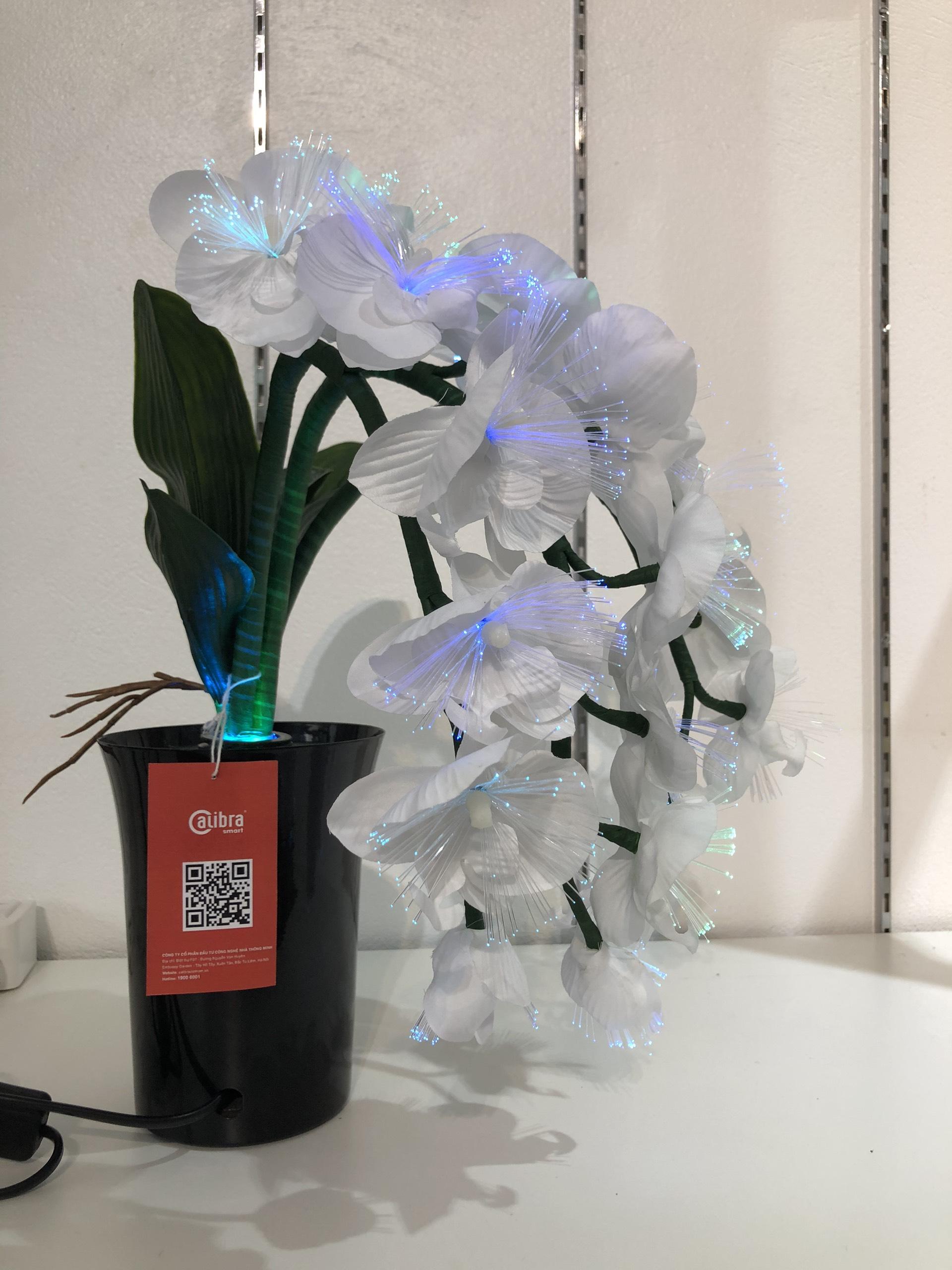 Bình hoa đèn led sợi quang đổi màu - bình hoa trang trí - bình hoa lan trắng cắm điện 220V - BH089