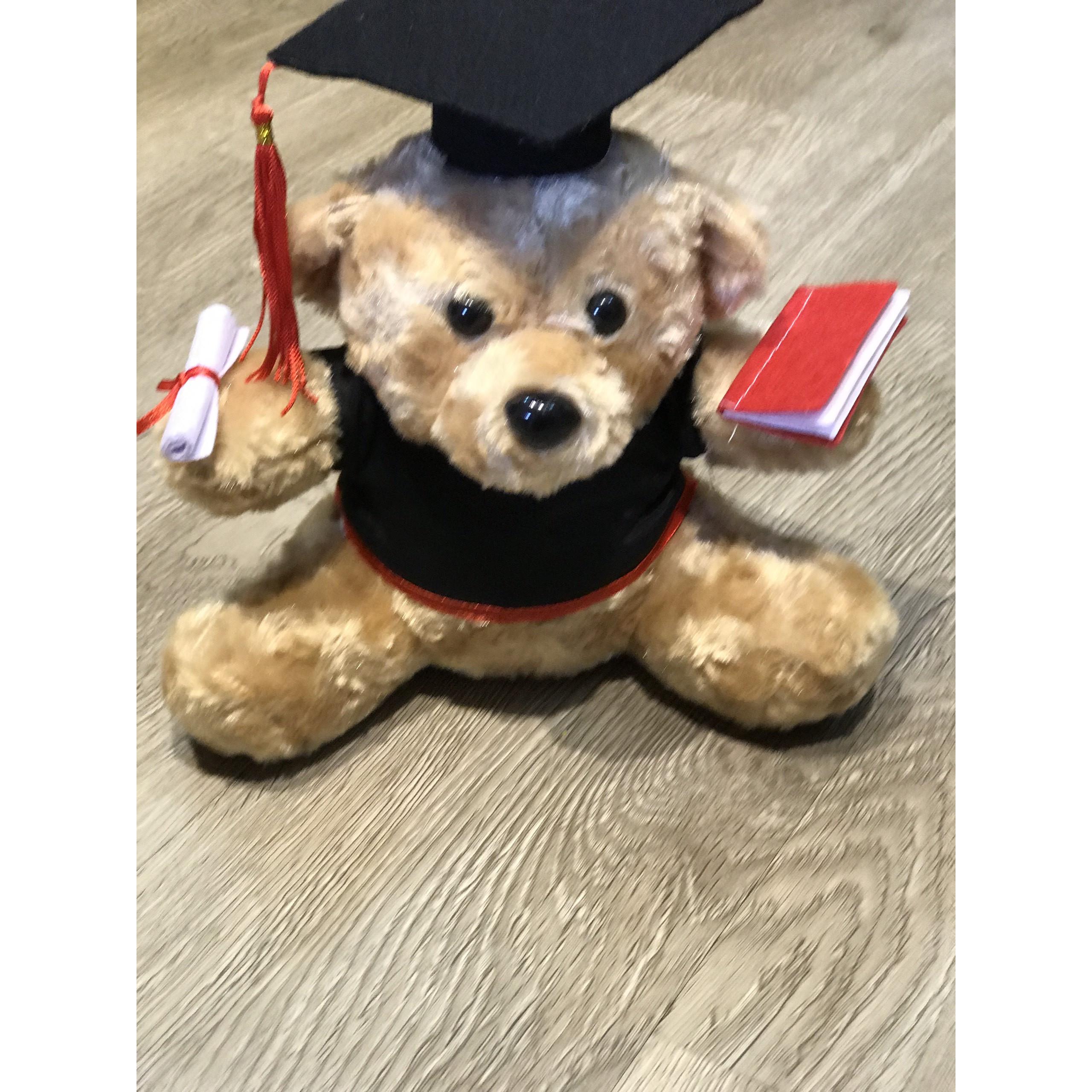 gấu tốt nghiệp size 40 lông xù