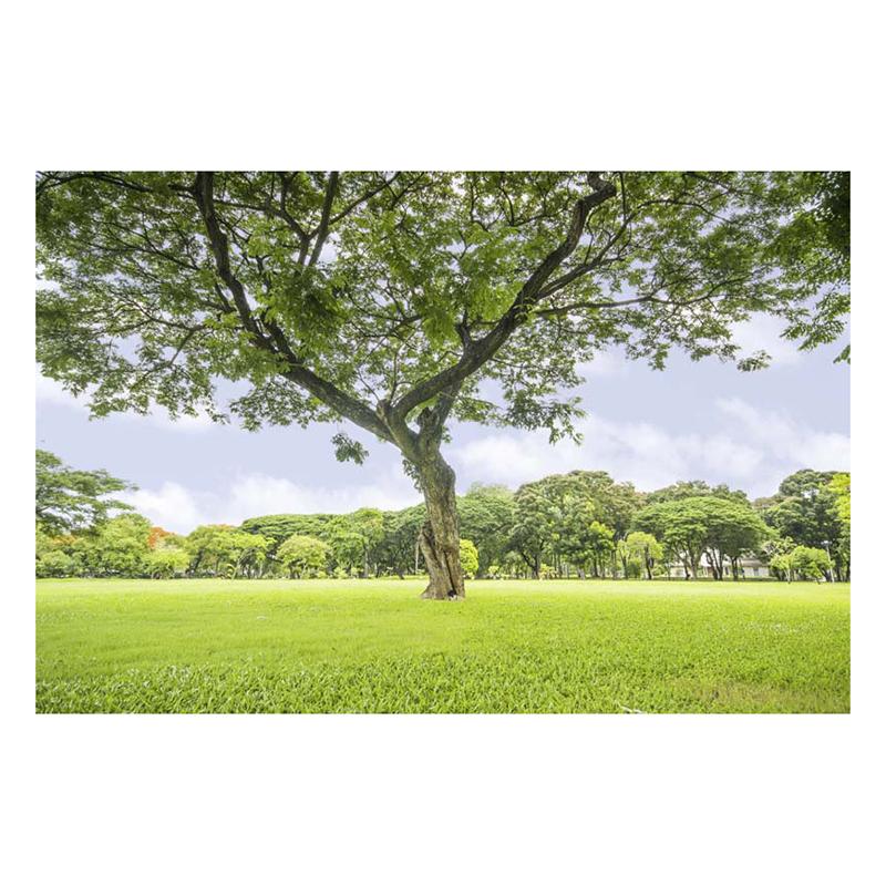 Tranh Dán Tường Phong Cảnh 3D LN0141 - 200 x 150 cm