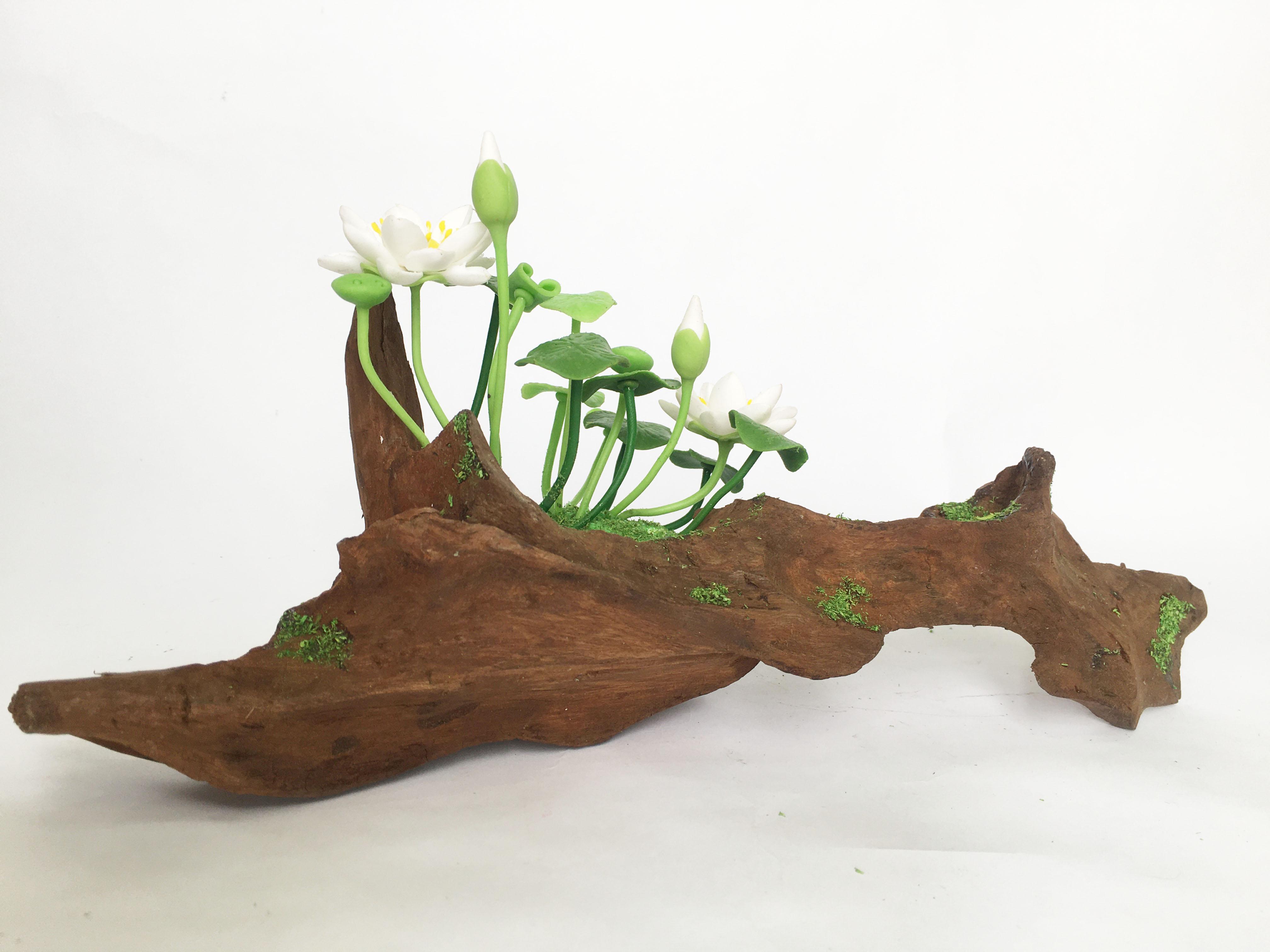 Lũa gỗ hình dáng tự nhiên kết hợp Hoa sen đất sét mini (2 bụi sen trắng) - Quà tặng trang trí handmade (20x10x10cm)