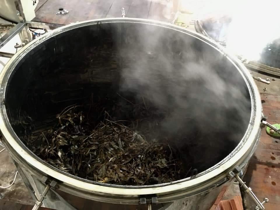 Tinh dầu Bạch Đàn Chanh 10ml Mộc Mây - tinh dầu thiên nhiên nguyên chất 100% - chất lượng và mùi hương vượt trội - Có kiểm định