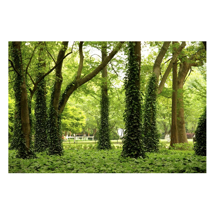 Tranh Dán Tường Phong Cảnh 3D LN0257 - 200 x 150 cm