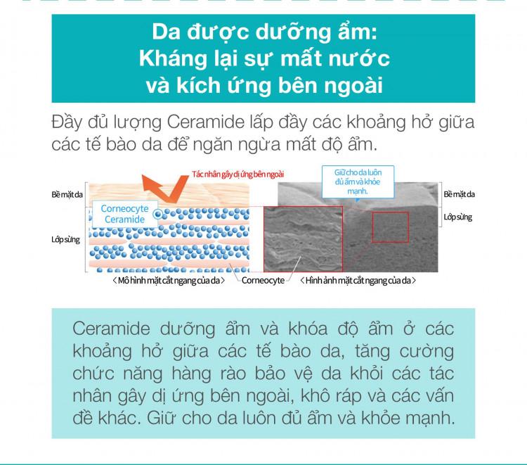 Son Dưỡng Môi Cấp Ẩm Chuyên Sâu Curel Intensive Moisture Care Moisture Lip Care Cream 4.2g (Không Màu) 5