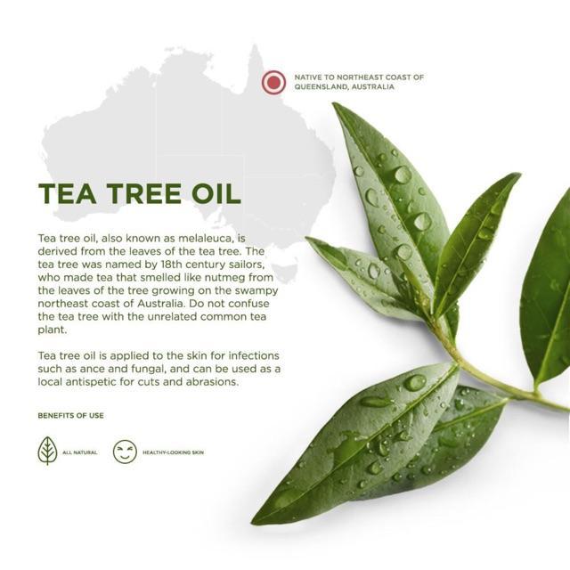 Tinh dầu tràm trà 10ml (Viện nông nghiệp nhiệt đới IAT)