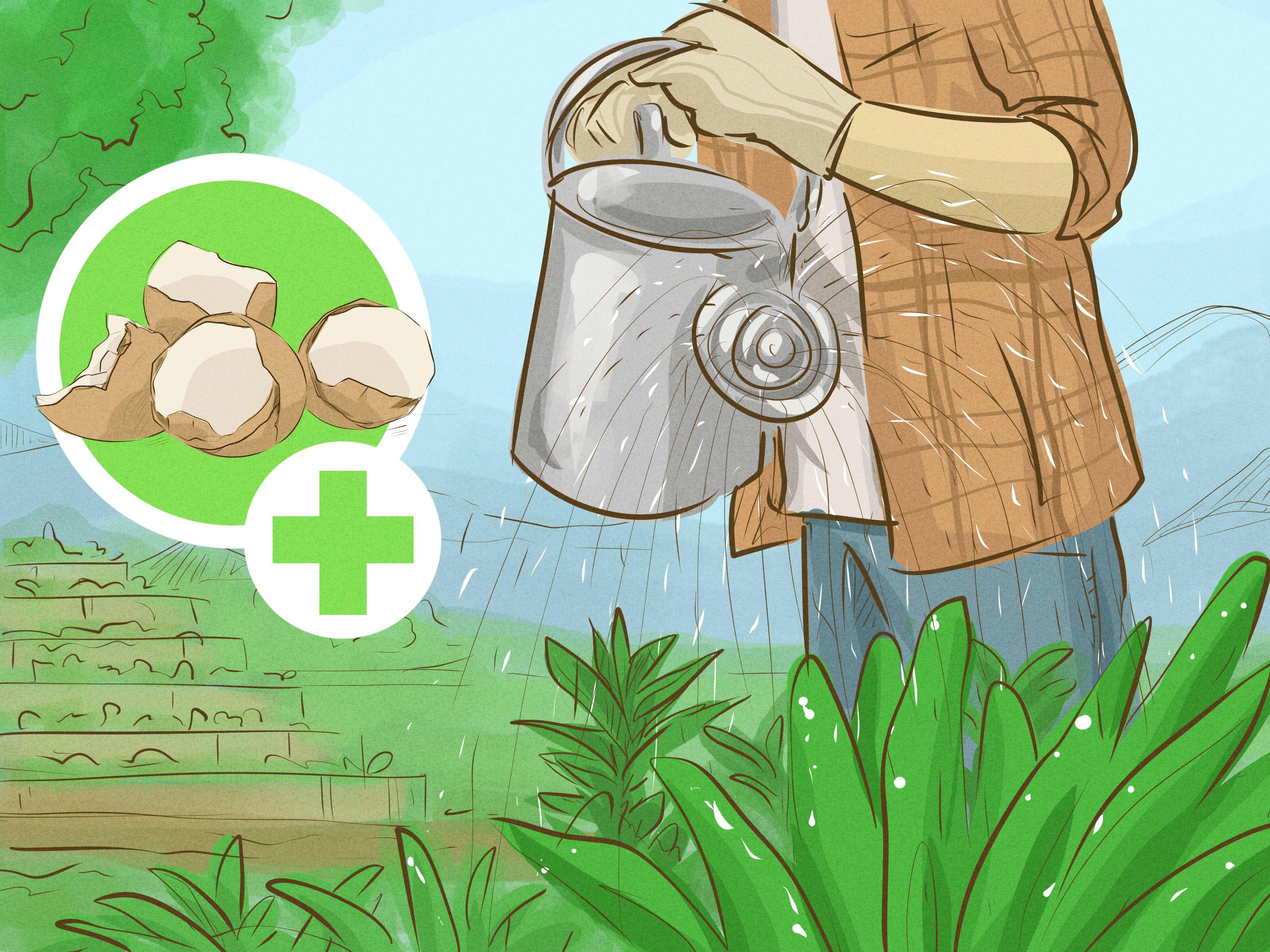 vỏ trứng gà. Dùng trong nông nghiệp. Cung cấp lượng canxi thiết yếu cho cây và lượng phân bón vi lượng tự nhiên. Tăng đề kháng bệnh, phòng ngừa ốc sên.