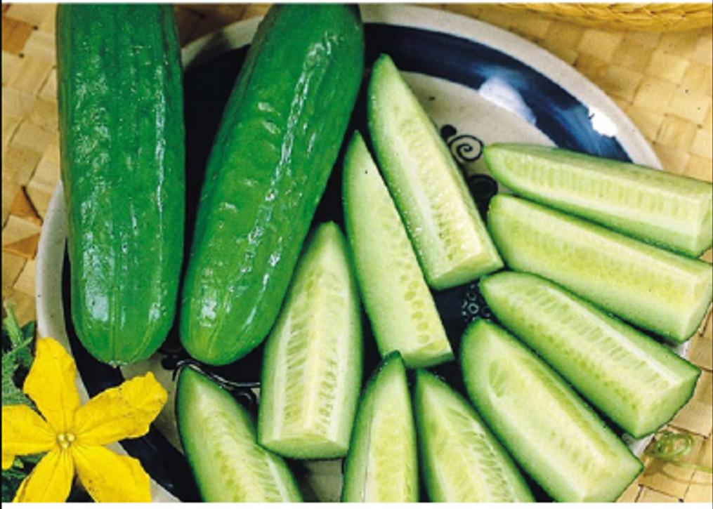 2 gói Hạt Giống Dưa Leo Baby ( Baby Cucumber x 2 packs)