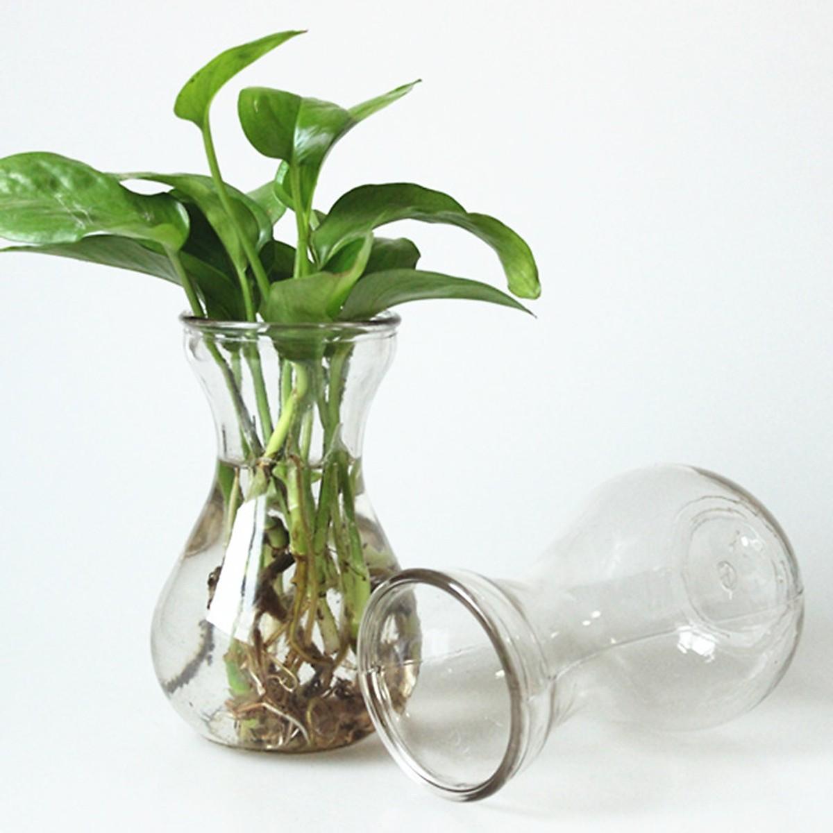 Bộ 2 bình bông lọ hoa thủy tinh miệng loe cao 14.5cm dùng cắm hoa trang trí phòng ăn, trồng cây thủy sinh để bàn làm việc hoặc làm ly đựng sinh tố