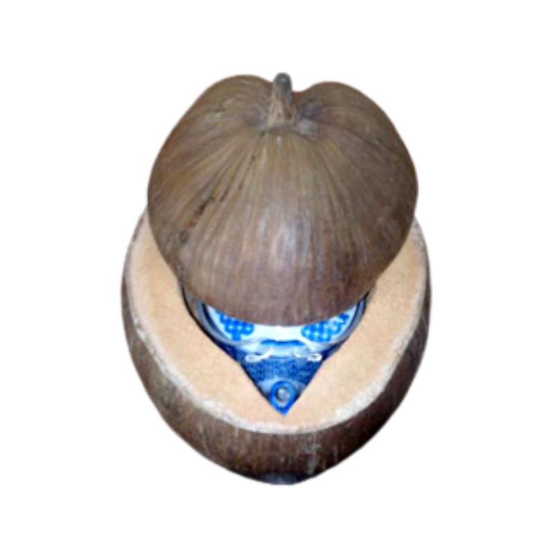 Bộ Vỏ Giữ Ấm Bình Trà Trái Dừa Không Sơn Màu Nguyên Thủy Của Trái Dừa - Bình Trà 400 - 700ml