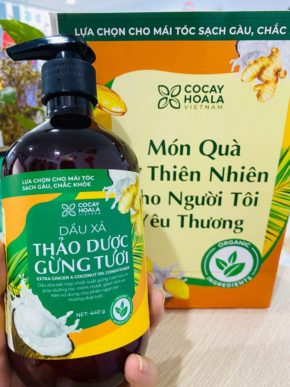 Bộ dầu gội thảo dược gừng dừa Cocayhoala hỗ trợ trị gàu, giảm nấm ngứa, dung tích 440g/chai- 95% thành phần từ gừng tươi hữu cơ còn nguyên xơ gừng, hỗ trợ trị rụng tóc, kích thích mọc tóc vượt trội
