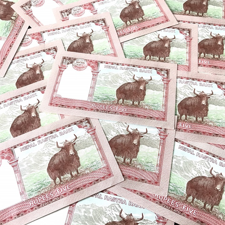 combo 30 tờ tiền con trâu nepal
