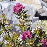 Phấn bắt sáng hữu cơ - Naturaglacé HIGHLIGHT POWDER 5