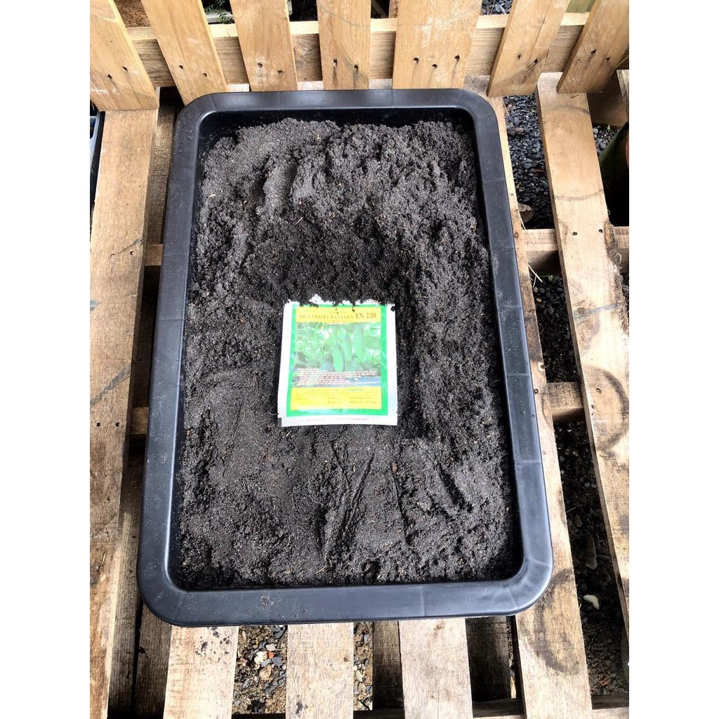 Dụng cụ trồng Dưa Leo gồm: 25dm3 đất sạch giàu dinh dưỡng, khay trồng, 20 hạt giống