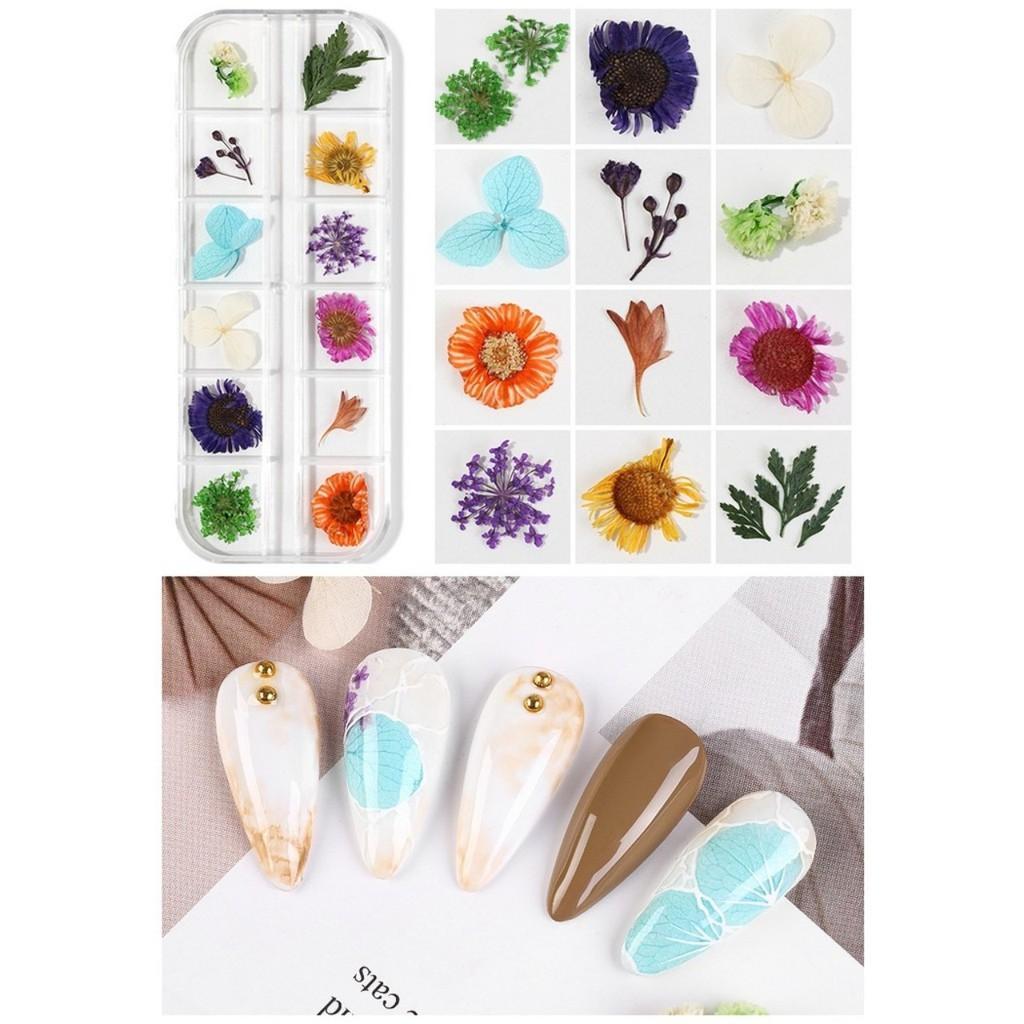 Khay hoa sấy khô trang trí móng BYH062