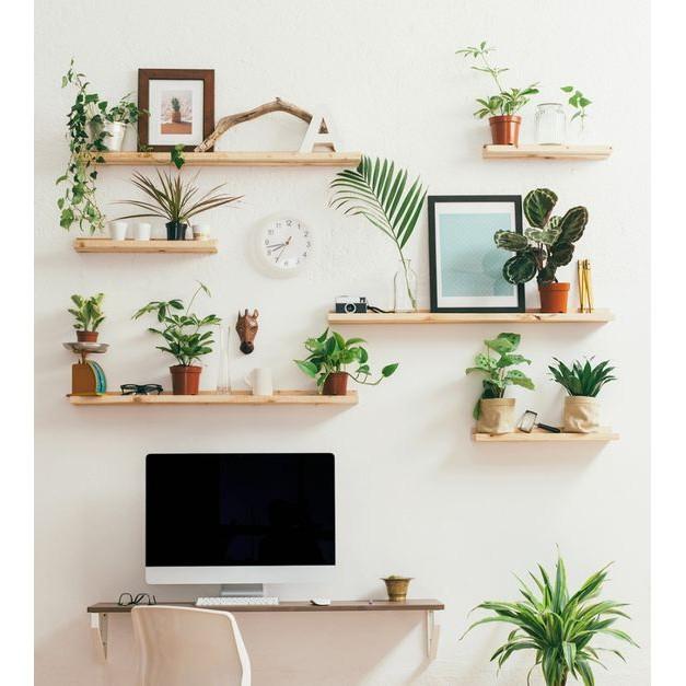 set 3 thanh Kệ gỗ thông treo tường Giá gắn tường decor trang trí nhà cửa bền đẹp sâu 15 cm - 60x15cm