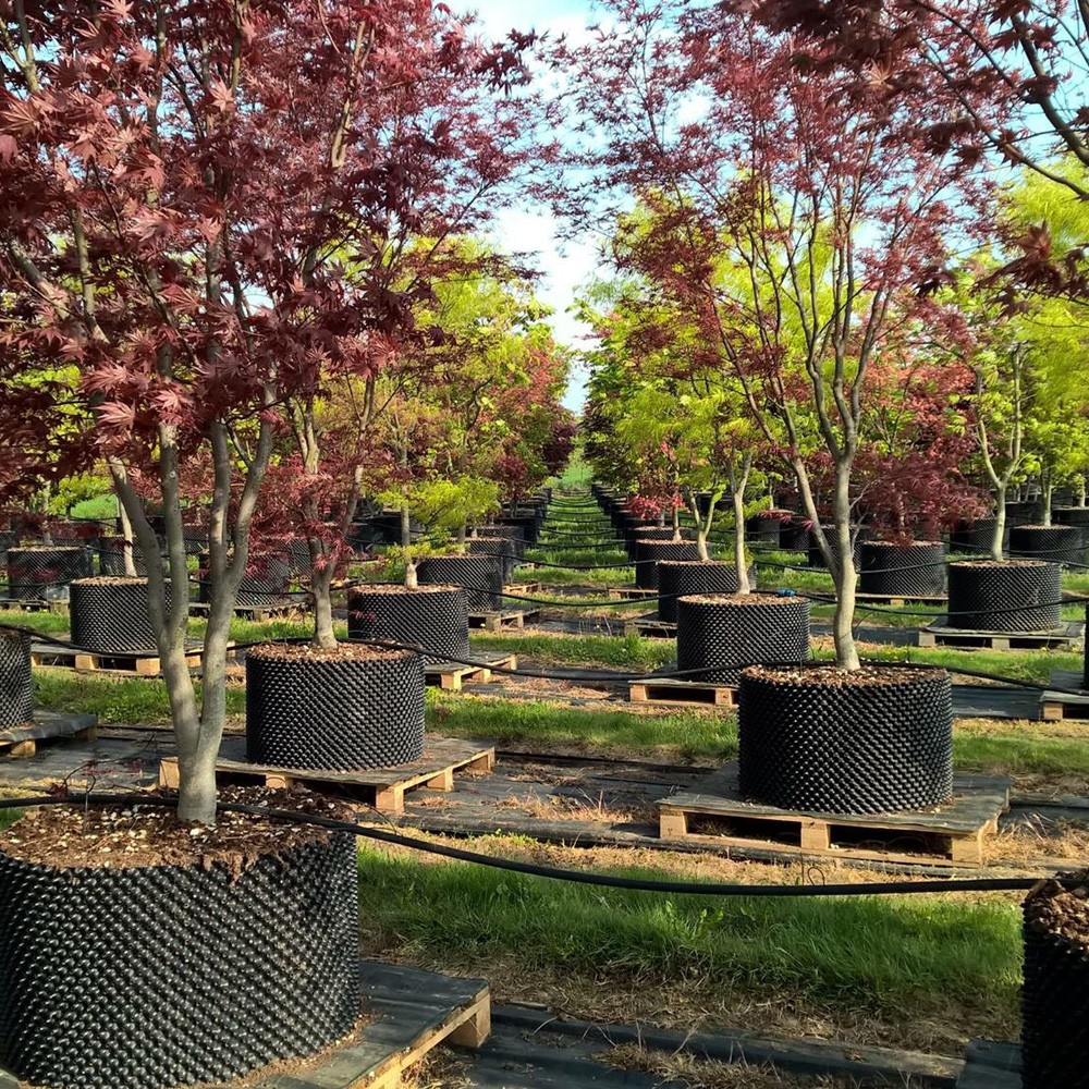 Bầu nhựa dưỡng cây C90 - Chậu dưỡng cây thông minh   Smart Pot