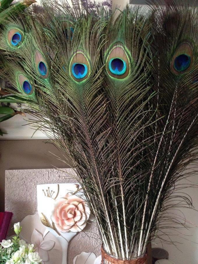 Lông công mắt to dài 60cm combo 20 lông