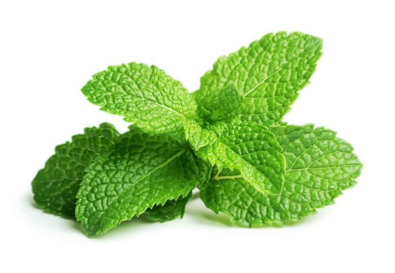 Tinh dầu Bạc Hà nguyên chất Lam Hà Peppermint (10ml) đa công dụng: kháng khuẩn, kháng viêm, làm đẹp, làm thơm phòng