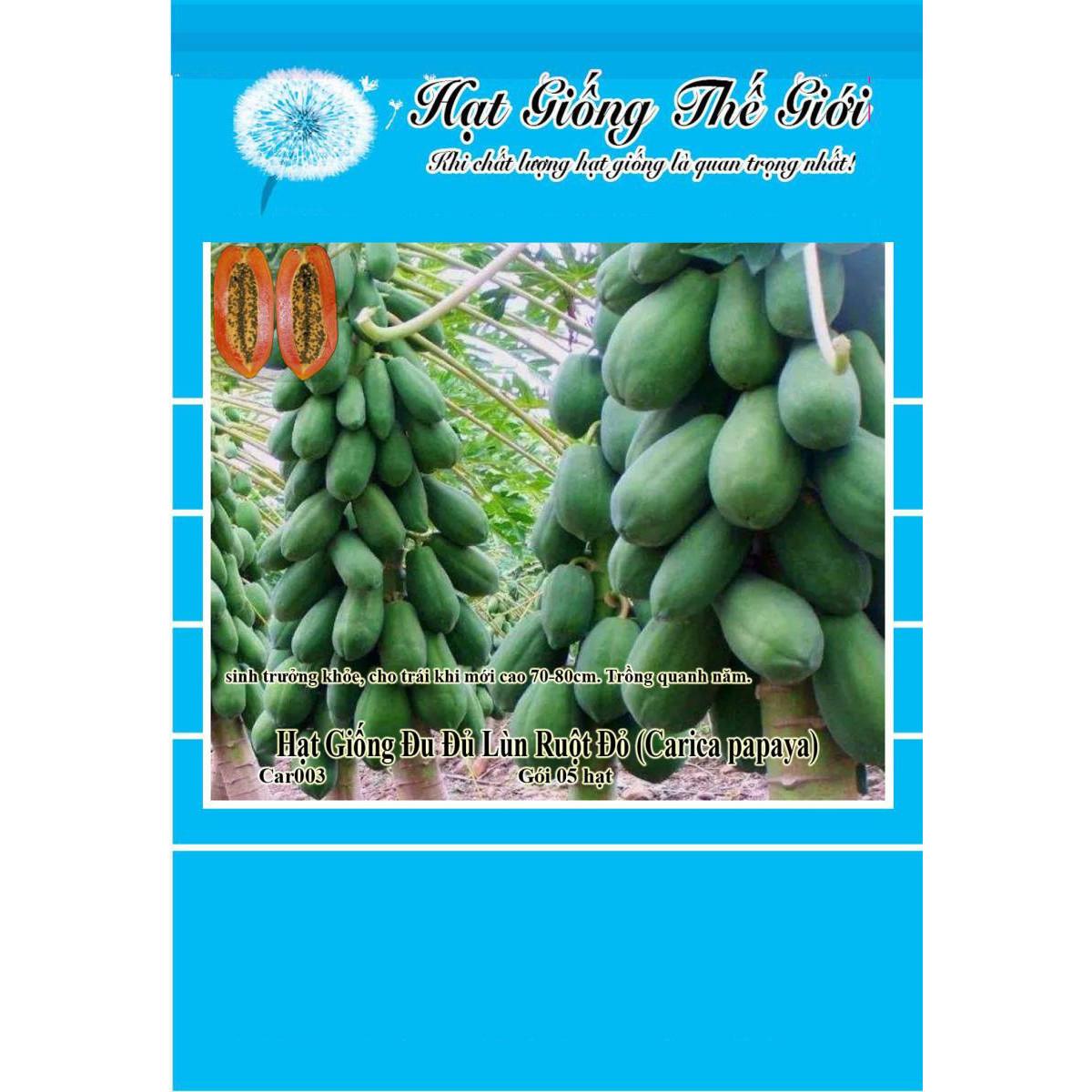 5h Hạt Giống Đu Đủ Lùn Ruột Đỏ Trái Lớn (Carica papaya)