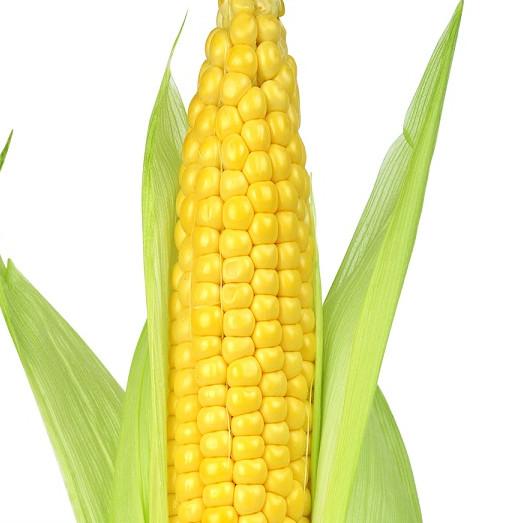 Hạt giống Bắp Mỹ (Ngô Mỹ) ( Gói 10 Gram ) - Nông Sản Vàng