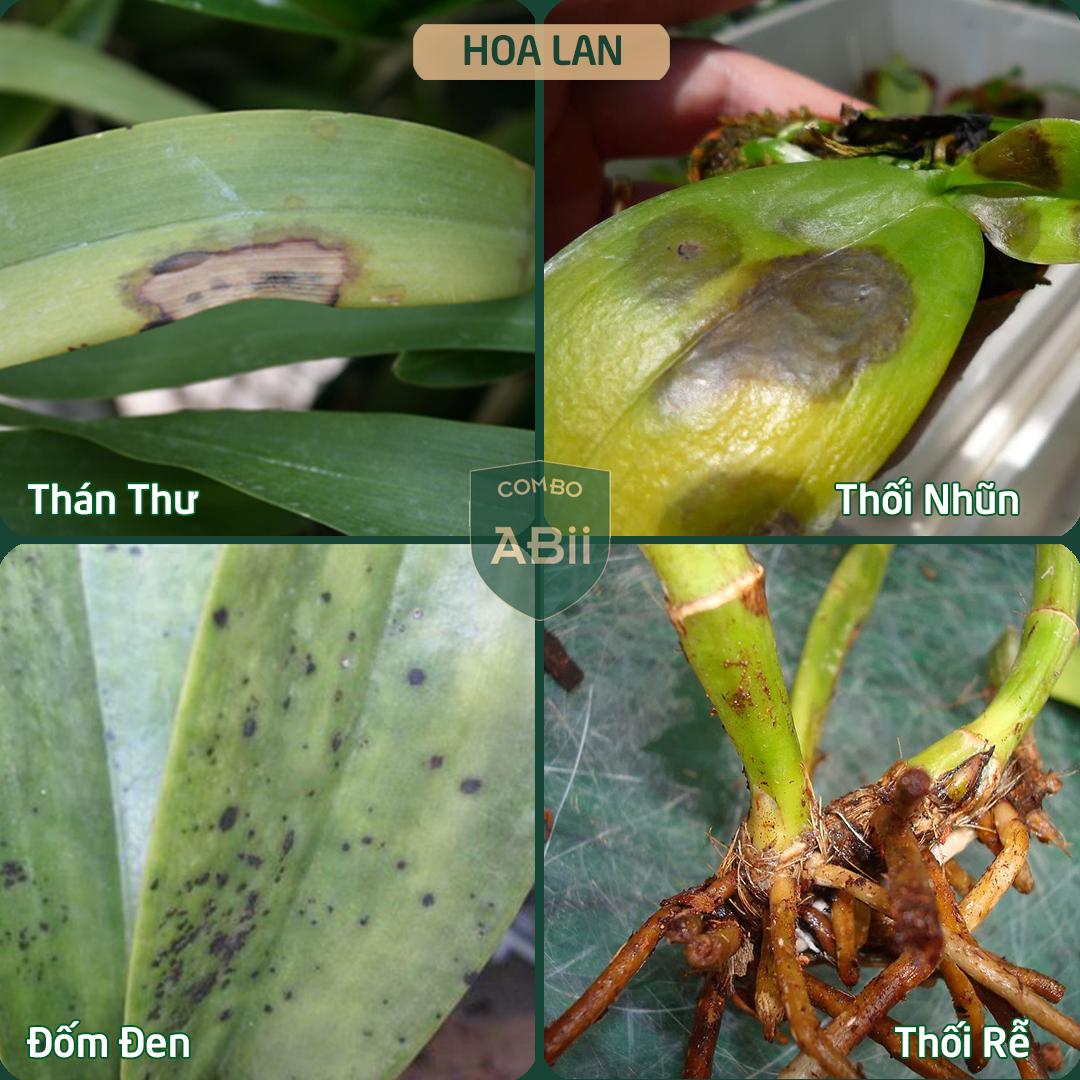 Combo chế phẩm trị bệnh cho hoa - ABii