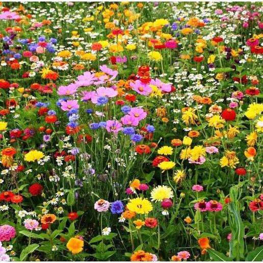 100H - Hạt giống hoa dại sân vườn kết hợp - mix >25 loại