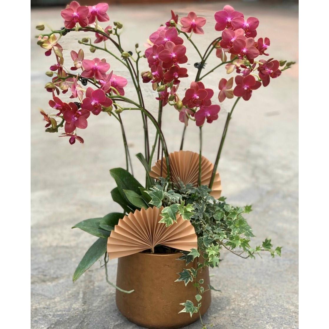 Chậu hoa Lan Hồ Điệp Đà Lạt - Mẫu 40 - Đường kính chậu 25 x cao 55 cm - Mầu Đỏ - Chậu hoa, cây cảnh tặng khai trương, tân gia