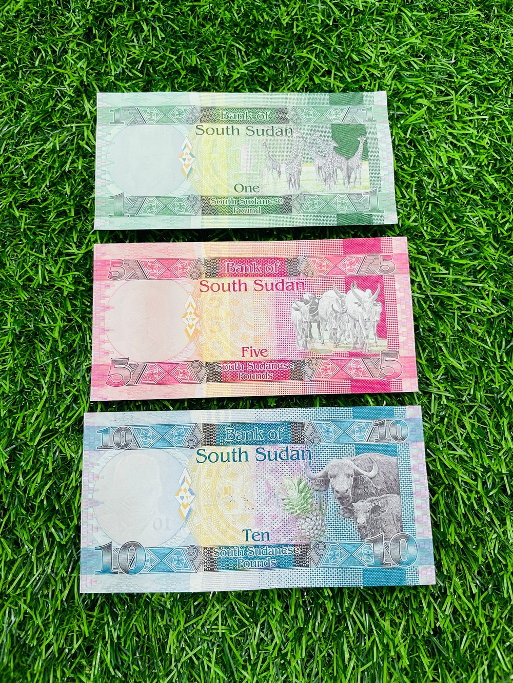 Bộ tiền Nam Sudan 1 5 10 Pound 3 tờ từ châu Phi, hình ảnh động vật, kèm bao lì xì The Merrick Mint