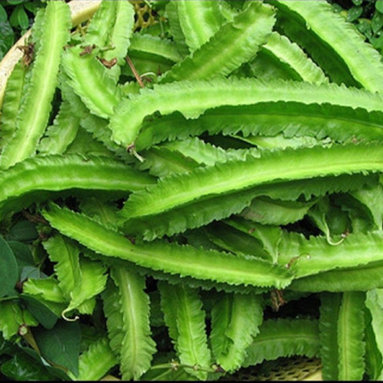Hạt Giống Đậu Rồng Phú Nông Gói 10 Gram