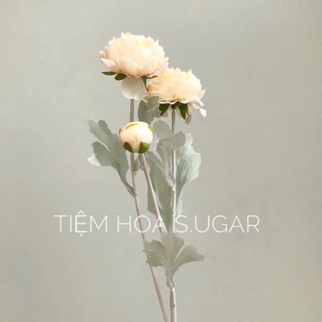 Hoa trà lá bạc