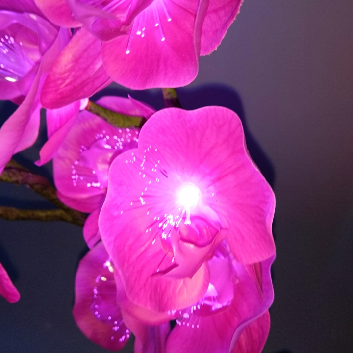 Bình hoa nhựa kết hợp công nghệ led - Lan Hồ Điệp tím