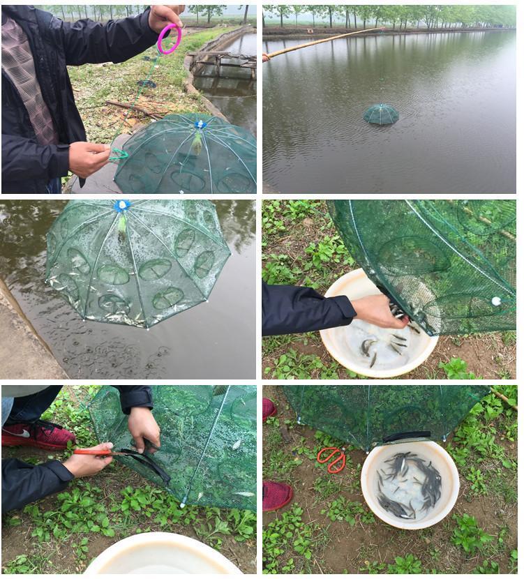 Lưới bát quái bắt cá 8 lỗ tiện dụng