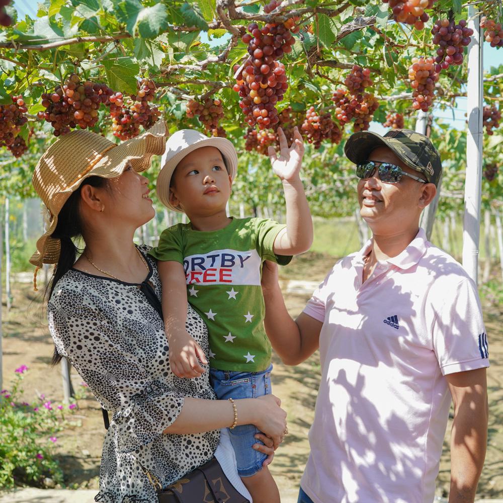 Tham quan Vườn Nho tại Phan Rang