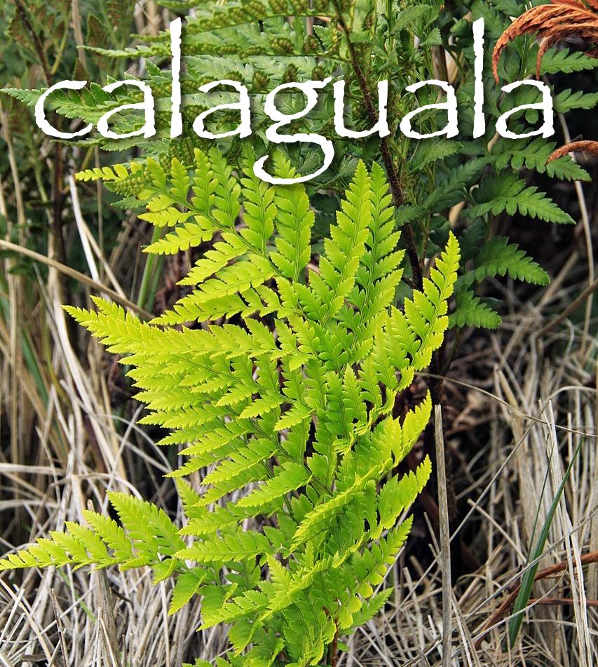 calaguala