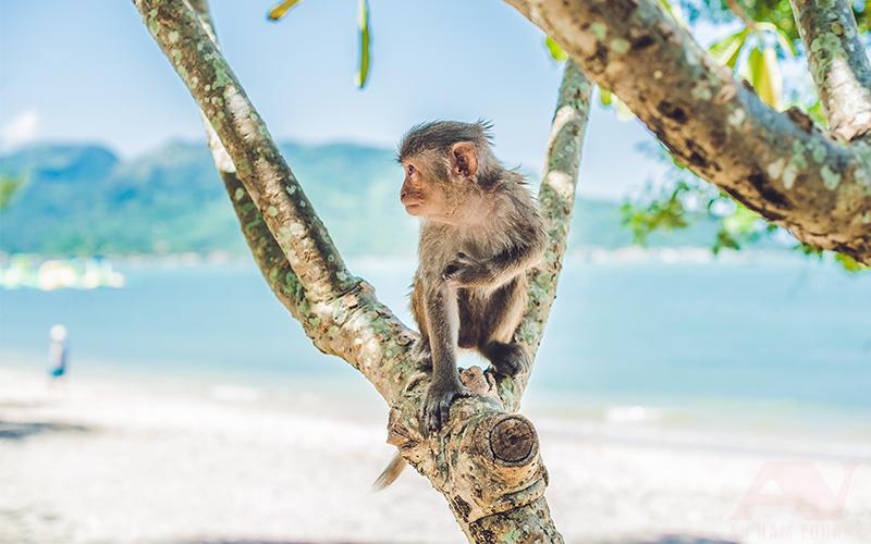 đảo khỉ nha trang an nam tour