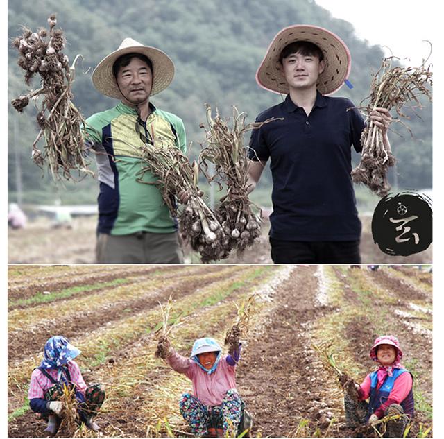 Nước Tỏi Đen Blacklabel (Hộp 10 Gói 12g) Hộp nhỏ ( Hàng nhập khẩu cao cấp Hàn Quốc) 3