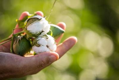Áo khoác nữ GOKING vải da cá dày 100% cotton, thích hợp chống nắng và giữ ấm hiệu quả 3