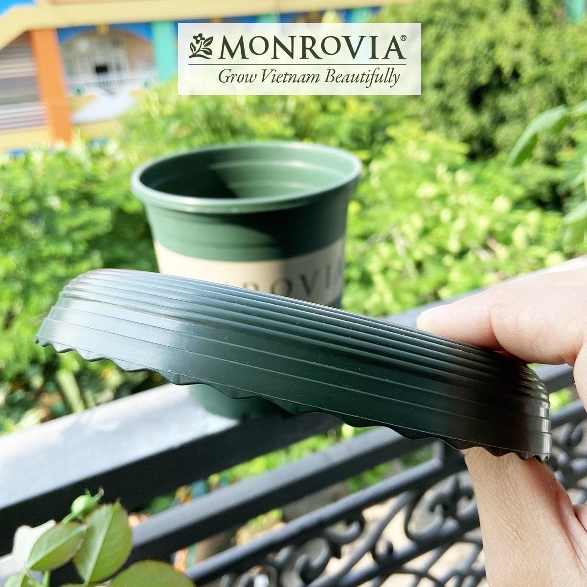 Đĩa lót chậu Monrovia 1 Gallon