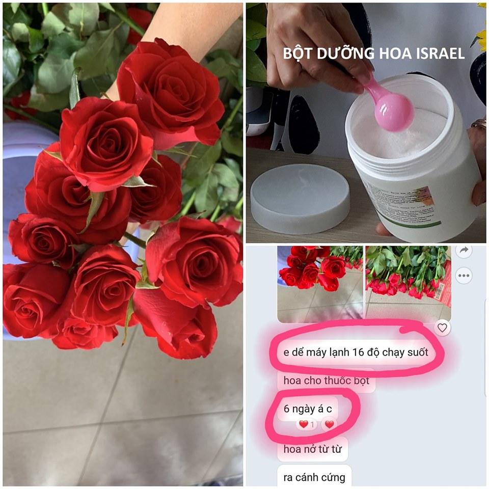 Bột Cắm Hoa Lâu Tàn Cho Hoa dùng hoa hoa hồng tại kiên giang